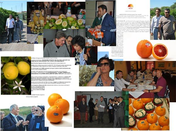 La filiera agrumicola della Sicilia - Gli operatori aggregati