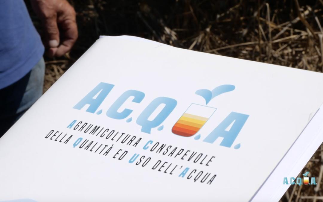 Agrumi, i risultati del progetto A.C.Q.U.A.: ecco come si usa l'acqua nella filiera agrumicola siciliana: qualità, sprechi, soluzioni irrigue, tecnologie