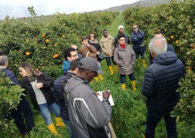 SF_agrumicoltura_biologica_Ribera_05032018_06
