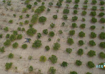 Volo drone su agrumeti // Progetto A.C.Q.U.A.