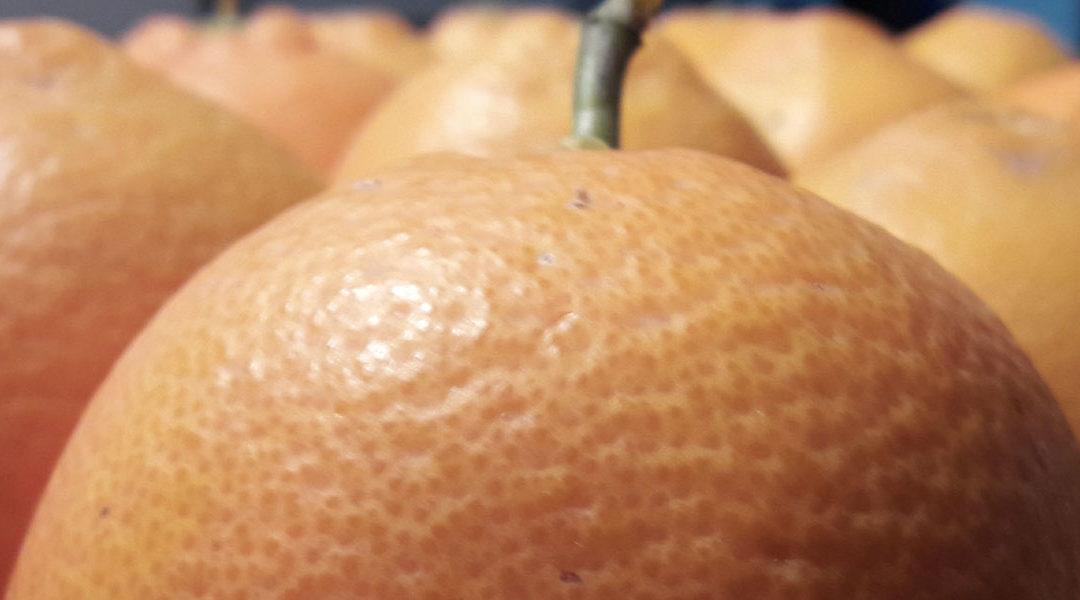 «Bene avvio export arance rosse in Cina con Alibaba, traguardo raggiunto grazie a logica di sistema»