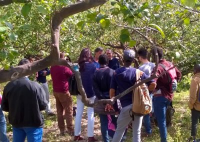 seminario_tecniche_coltivazione_agrumeto_04