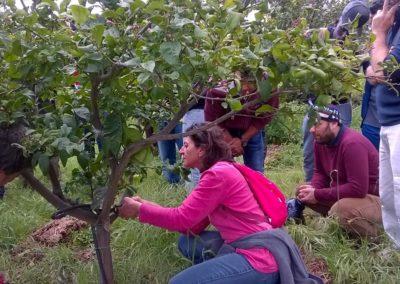 seminario_tecniche_coltivazione_agrumeto_05