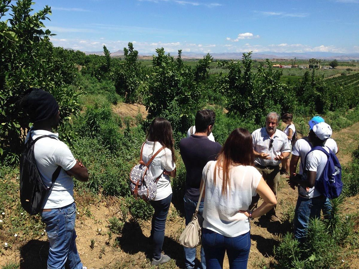 16/06/2016 - Course 'Techniques of cultivation of a citrus grove' - Catania