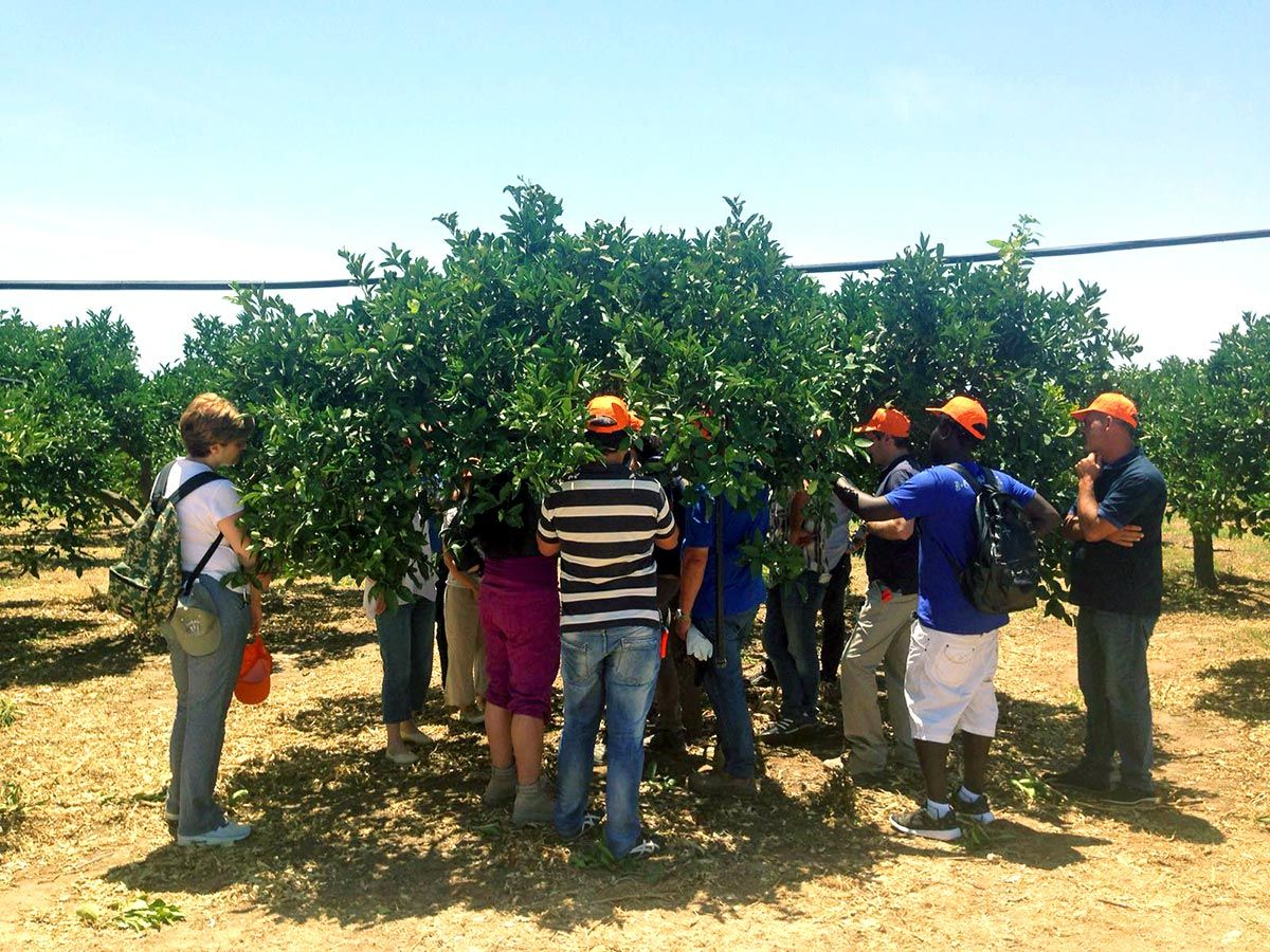 25/06/2016 - Course 'Techniques of cultivation of a citrus grove' - Ribera